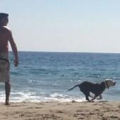 enjoying dog beach